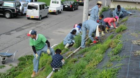 芝桜補植ボランティア